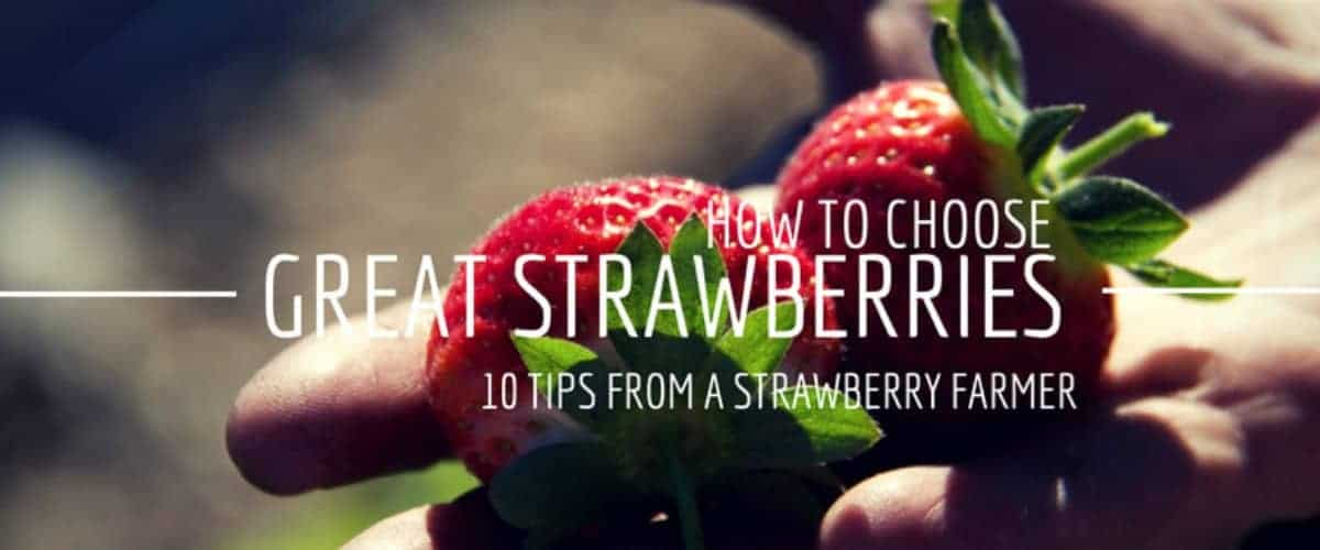 how to choose great strawberries