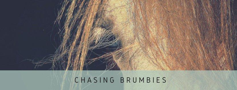 chasing brumbies
